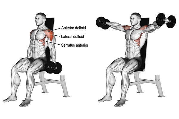 Bài tập Seated Side Lateral Raise